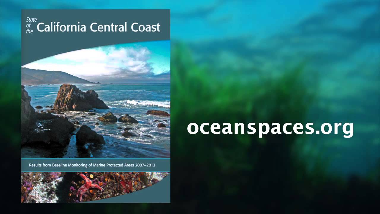 """Central California Marine Protected Areas """"On Track"""" To Help Ocean"""