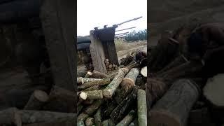 Máy cày cho gỗ cao su bị lật qua nguy hiểm