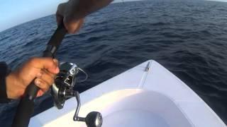 Shimano Stella 6000 Vs Yellowfin Tuna