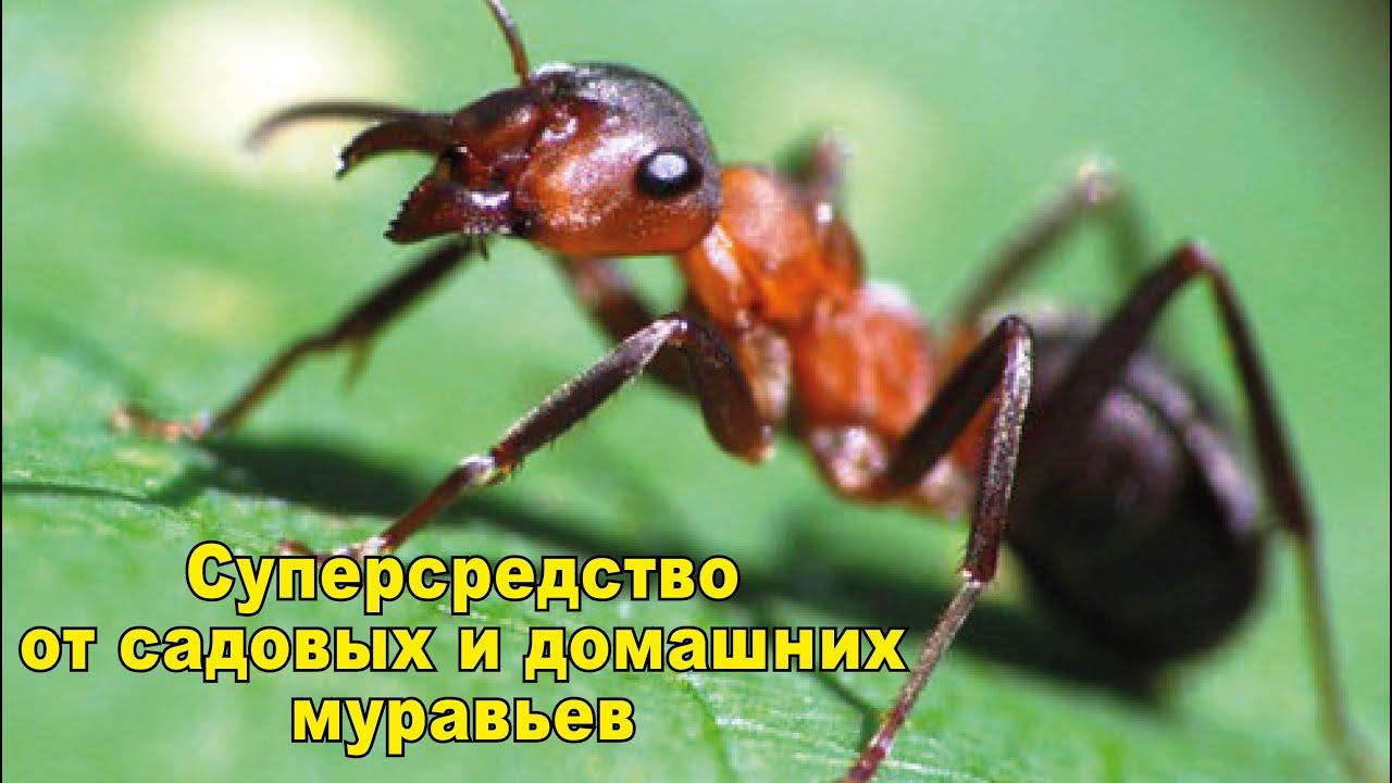 В разделе средства защиты от тараканов, прусаков, клопов, блох, домашних и садовых муравьев можно купить следующие товары: euroguard гель от муравьев шприц 20 мл | euroguard гель от тараканов шприц 20 мл | euroguard ловушка 6 дисков | euroguard мелок 20 г | global ампула от муравьев 2 мл.