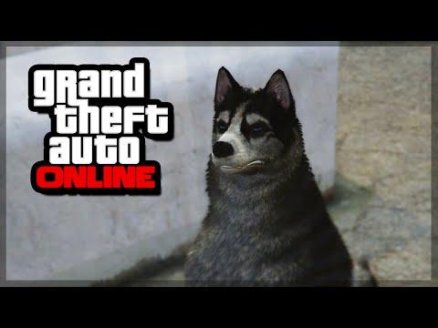 GTA 5 Pet | ElaEgypt