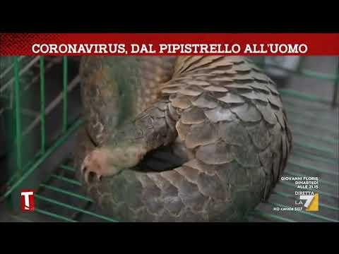 Coronavirus, Dal Pipistrello All'uomo. Alle Origini Della Diffusione Del Virus