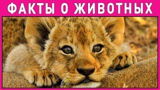ОТГАДАЙ какое это ЖИВОТНОЕ. ТЕСТ ДЛЯ ДЕТЕЙ. Интересные факты о животных. Империя Тестов