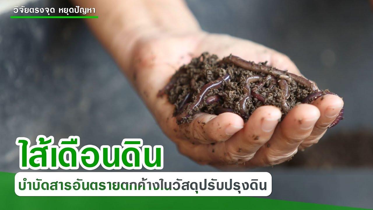 ไส้เดือนดินบำบัดสารอันตรายตกค้างในวัสดุปรับปรุงดินจากขยะชุมชน