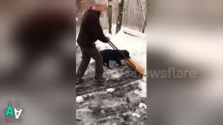 Helpful Puppy Clears Snow from Driveway