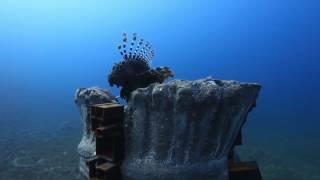 «القبيلة» الفيلم المشارك بـ«قمرة» يجمع لاستصلاح البيئة البحرية بالفن والعلم