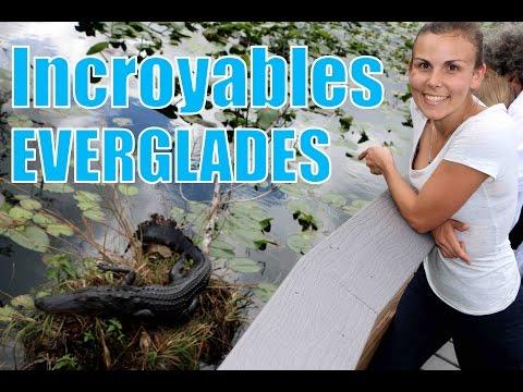 Visiter les Everglades : drone, Alligators, nature et découvertes au rendez-vous - Family Coste