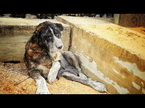 DRAMATIC RESCUE OF ABANDONED DOG LIVING AMONG TRASH !