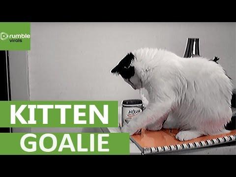 Kitten literally knocks over everything in sight