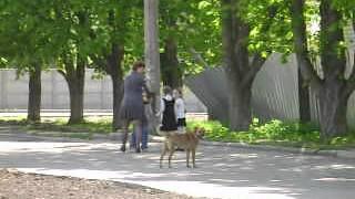 Собака лает на детей(В парке Юбилейном., 2012-04-27T10:20:57.000Z)