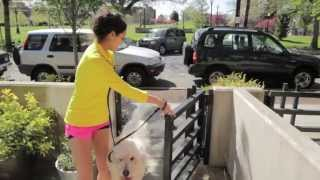 Jogs For Dogs
