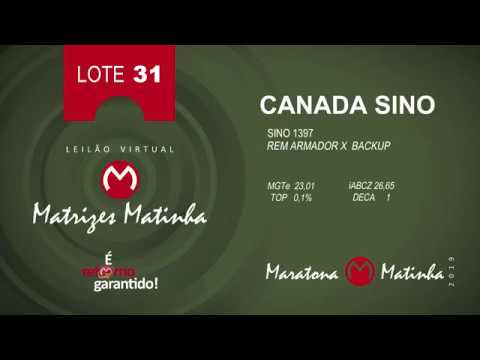 LOTE 31 Matrizes Matinha 2019