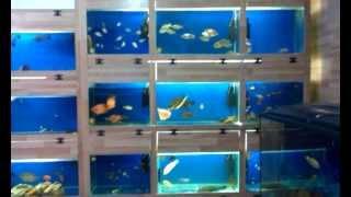 Аквариумы в баку, Аквариумные рыбки 050 3220663(Аквариумы в баку, Аквариумистика - одно из самых распространенных увлечений. Аквариум гармонично вписывает..., 2012-09-02T14:28:17.000Z)