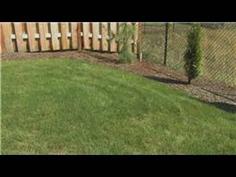 Lawn Care  How Soon Can You Fertilize New Grass  YouTube
