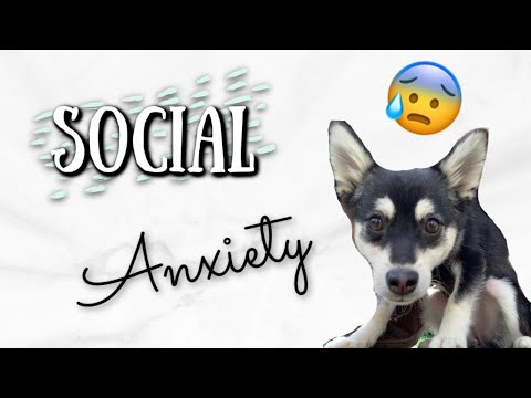Separation Anxiety: What To Do About Your Dog's Separation Anxiety (Alaskan Klee Kai)