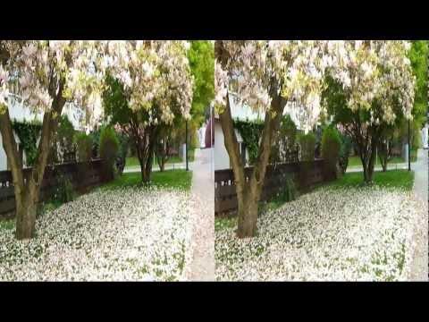 видеоприкол цветы 3d