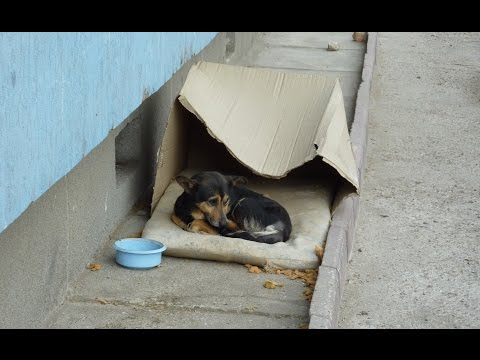 Thumbnail: Homeless dog living in a cardboard box gets rescued & has a heartwarming transformation.