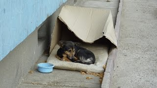 dog living in cardboard box