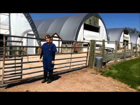 Alternative Swine Biosecurity: Tips for Hoop Barns and Open Areas