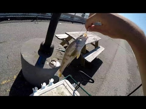 November Saltwater Fishing On The Broad River Pier In Beaufort SC