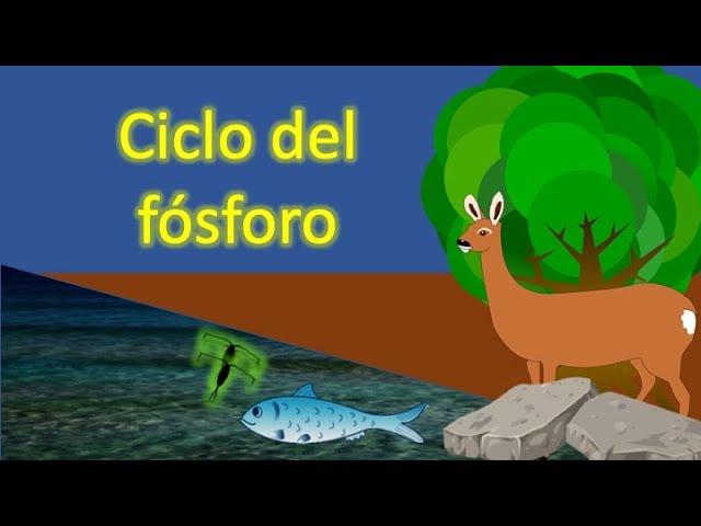 Ciclo Del Fósforo Ciclos Biogeoquímicos Youtube