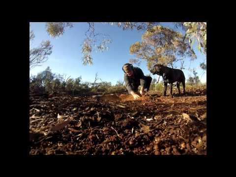 Gold Prospecting in Kalgoorlie area Western Australia.