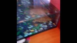 Моя водная черепаха боится Коула