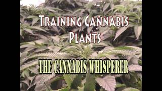 Training Cannabis