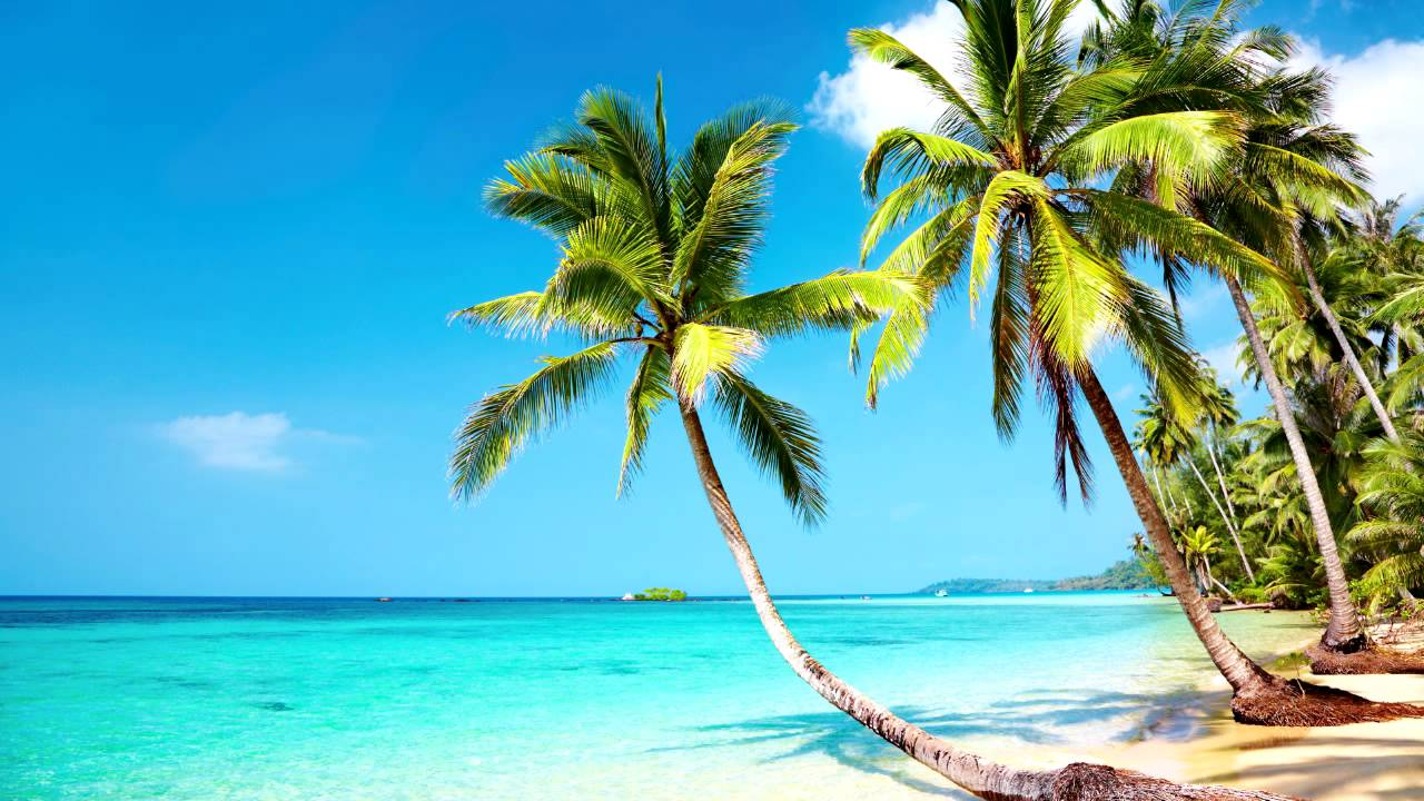 Beach Party Music Tropical Mexican Relax Work Study Ambience