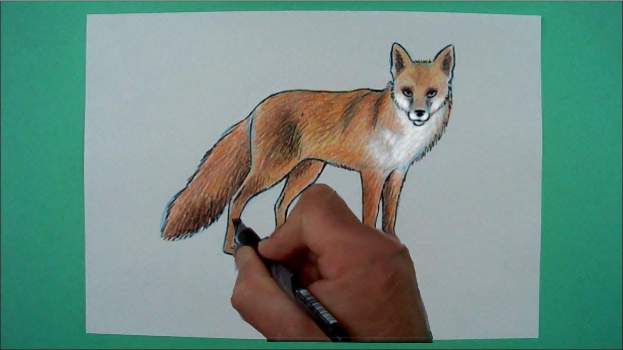 Wie zeichnet man einen Fuchs ? Zeichnen für Kinder - YouTube