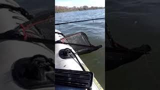 Щука с лодки на спиннинг Осенью 2020 на Озере