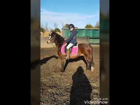 perfect lead rein pony