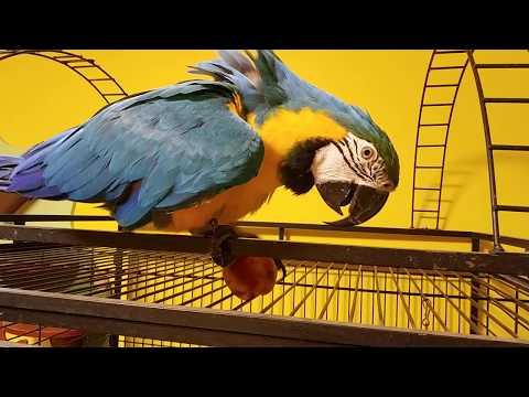 гигант среди попугаев 3 буквы