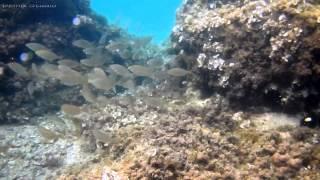 Chorwacja - Podwodny świat Morza Adriatyckiego