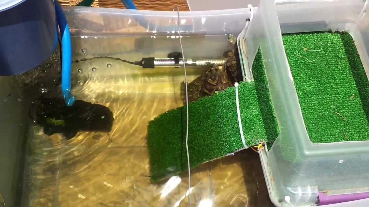 Nuevo habitat de mis tortugas de orejas rojas youtube for Tortuguero casero