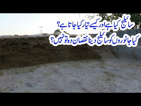 Download 09   Silage Making Process    How to Make Silage    Silage For Animals    Silage in Urdu
