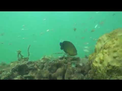 Fish Playing Peek-a-Boo