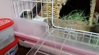토끼출산 9일차 엄청난 속도로 성장중~