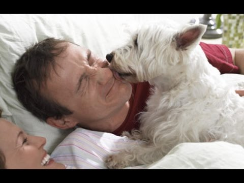 Top 10 of the funniest Dog Alarm Clocks (Dogs waking up their owners)