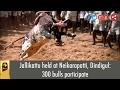Jallikattu Held At Neikarapatti, Dindigul: 300 Bulls Participate video