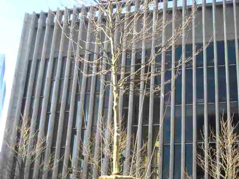 Silva Cell Installation: Lincoln Center (Bosque)