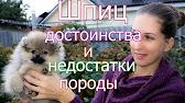 Как выбрать щенка//Совет кинолога// ЧАСТЬ 1 - YouTube