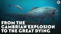From the Cambrian Explosion to the Great Dying