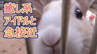 淡路島の可愛い動物に癒される!!【秋の淡路島キャンプ赤髪のとも】#7 thumbnail