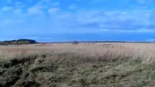 Охота на куропатку с венгерской выжлой. Октябрь 2017