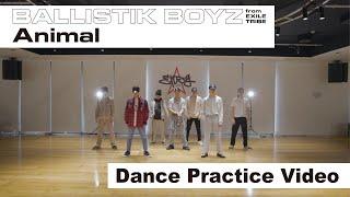 BALLISTIK BOYZ from EXILE TRIBE / 「Animal」 - Dance Practice Video -
