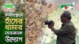 Duck Farming   Shykh Seraj   হাঁসের খামার লাভজনক উদ্যোগ   Channel i