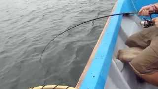 pesca corvina cojimies Ecuador Jorge Araujo