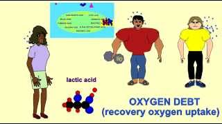 OXYGEN DEBT AFTER EXERCISE