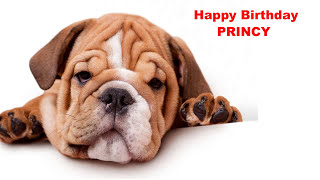 Princy  Dogs Perros - Happy Birthday